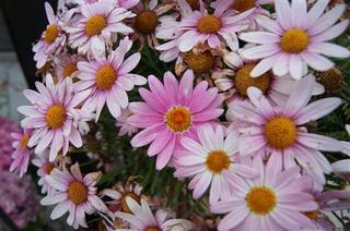 お花16.jpg