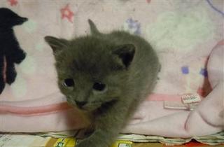 赤ちゃん猫34.jpg