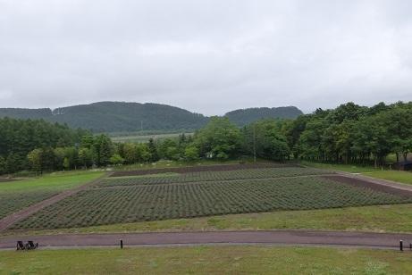 P景色1.JPG